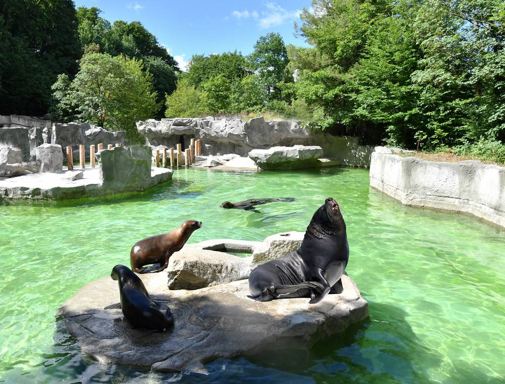 tierpark hellabrunn hellabrunn zoo in the top 10 most popular tourist attractions. Black Bedroom Furniture Sets. Home Design Ideas